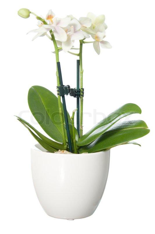 orkide urtepotte