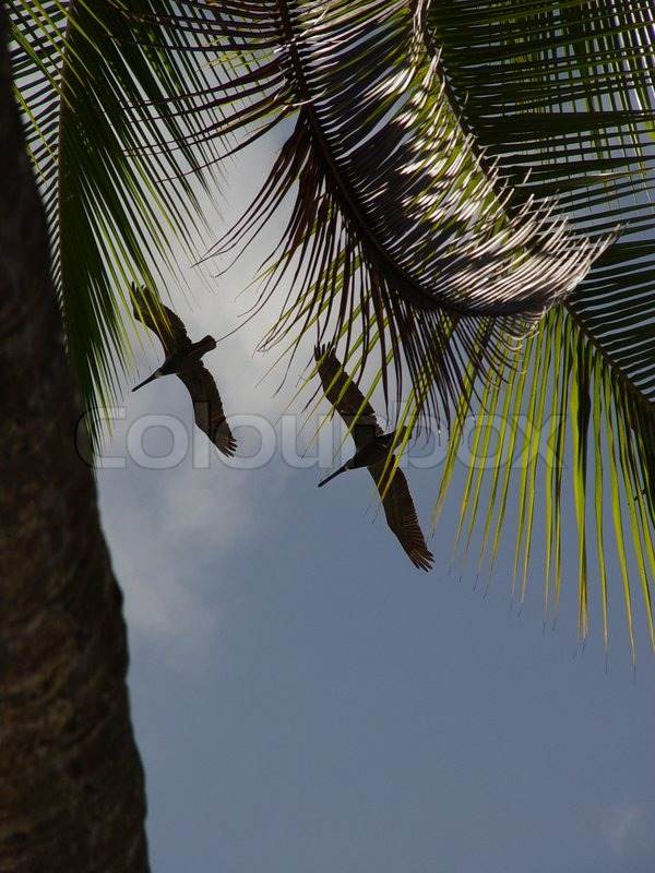 Stock image of \'tropical, animals, costa rica\'
