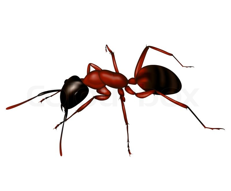 Ant A Silhouette In Vector Stock Vector Colourbox