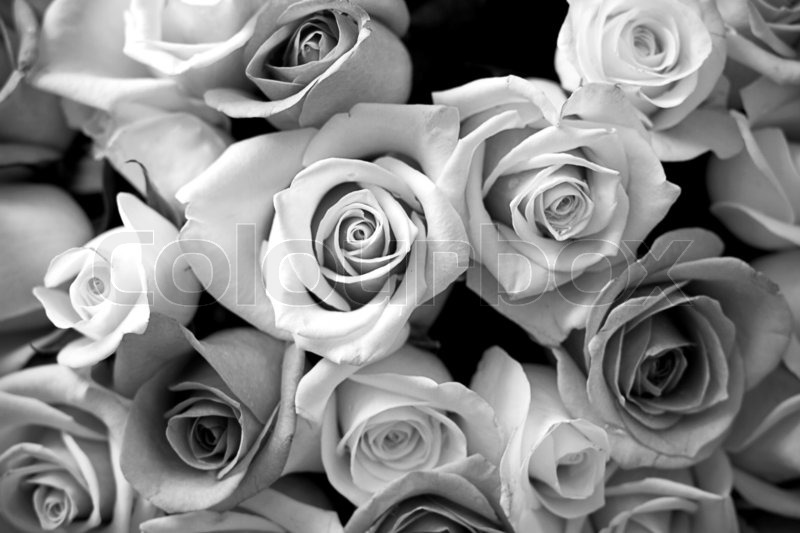 black and white roses bouquet stock photo colourbox