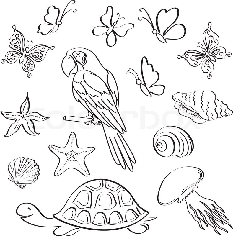 Set Of Exotic Animals And Insects Black Contour On White