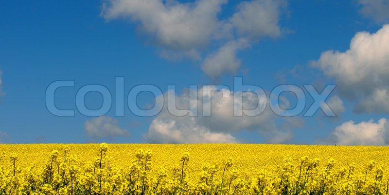 Stock image of 'fileld, fields, rural'