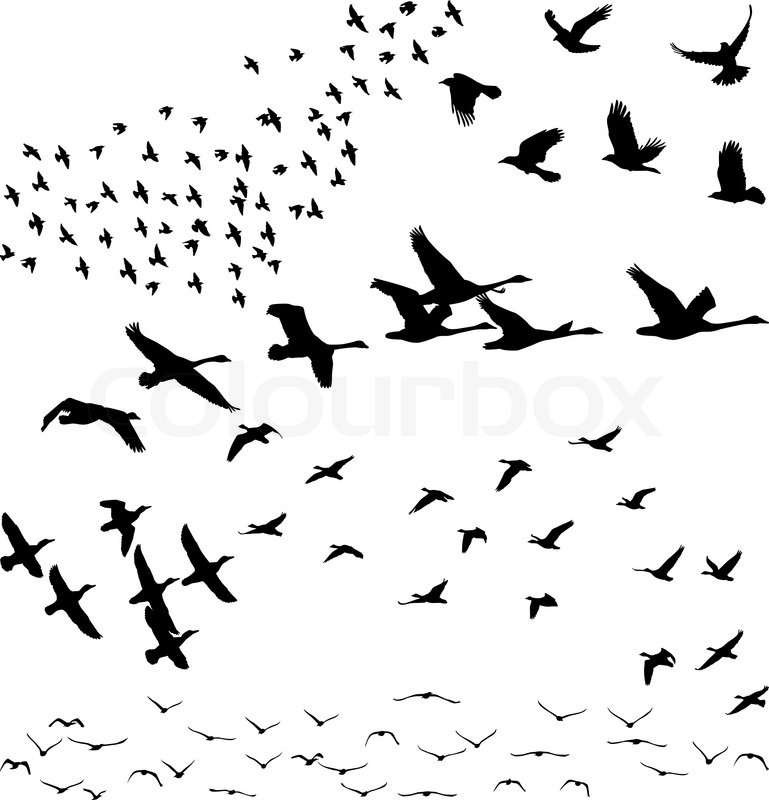 Vector Silhouettes A Flock Of Birds Crows Swans Geese Stock