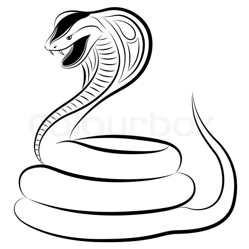 snake  cobraeps  stock vektor  colourbox