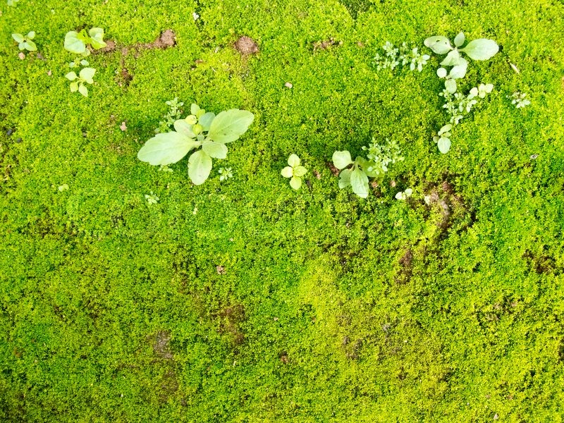 Green Moss On Ground With Plant Stock Photo Colourbox