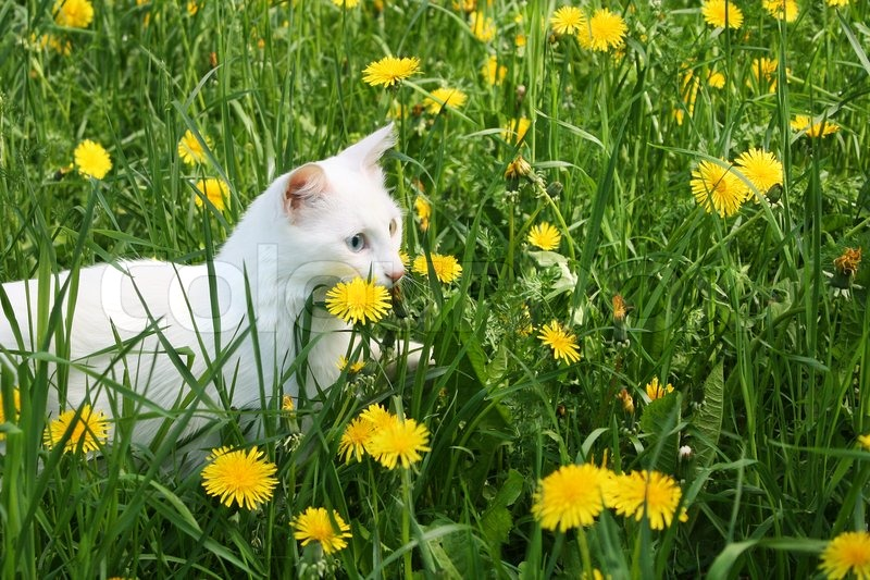 White cat among yellow colors, stock photo