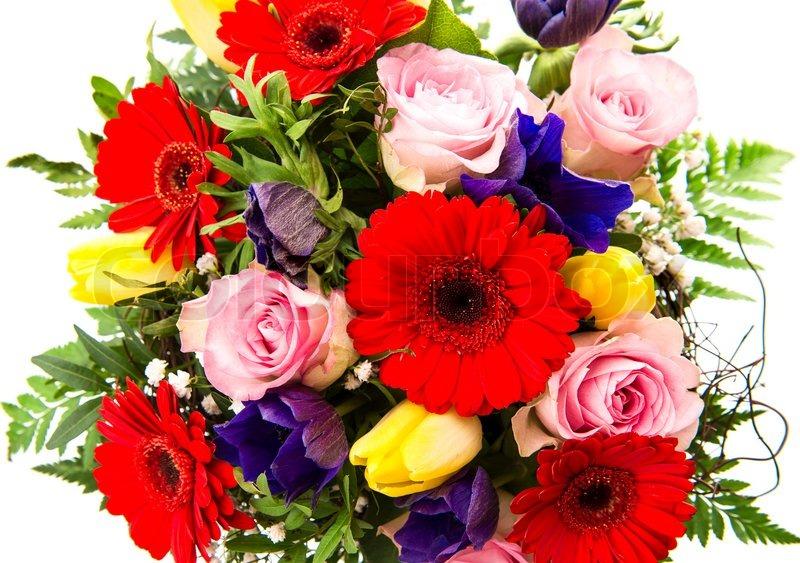 Closeup of colorful spring flowers stock photo colourbox mightylinksfo
