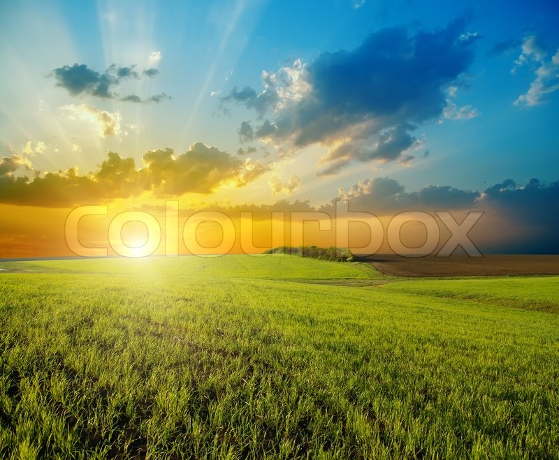 Sunset over agricultural green field, stock photo