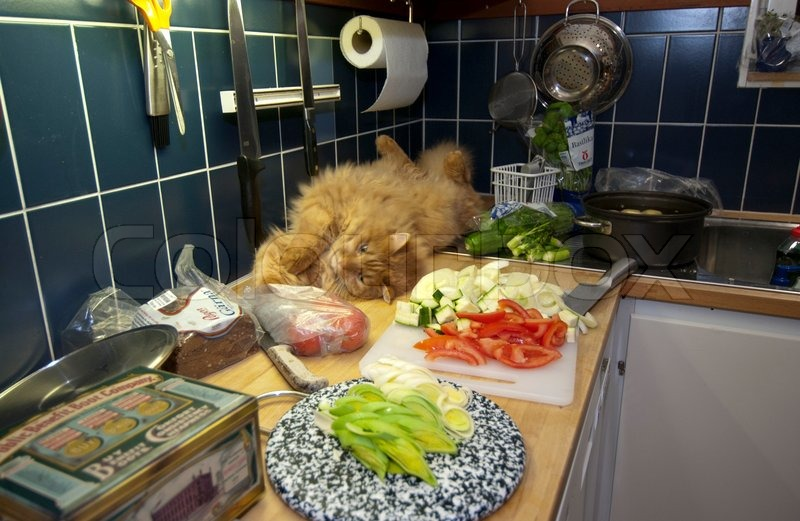 Cat In The Kitchen While Cooking Stock Image Colourbox