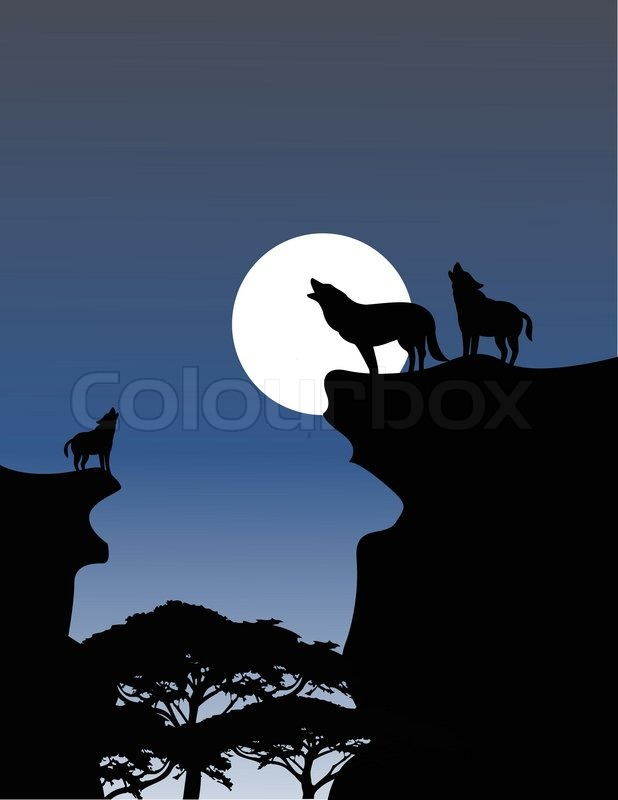 Image Result For Wolf Stock Video