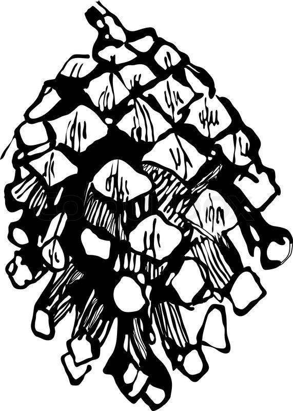 Zeichnen Tannenzapfen   Vektorgrafik   Colourbox