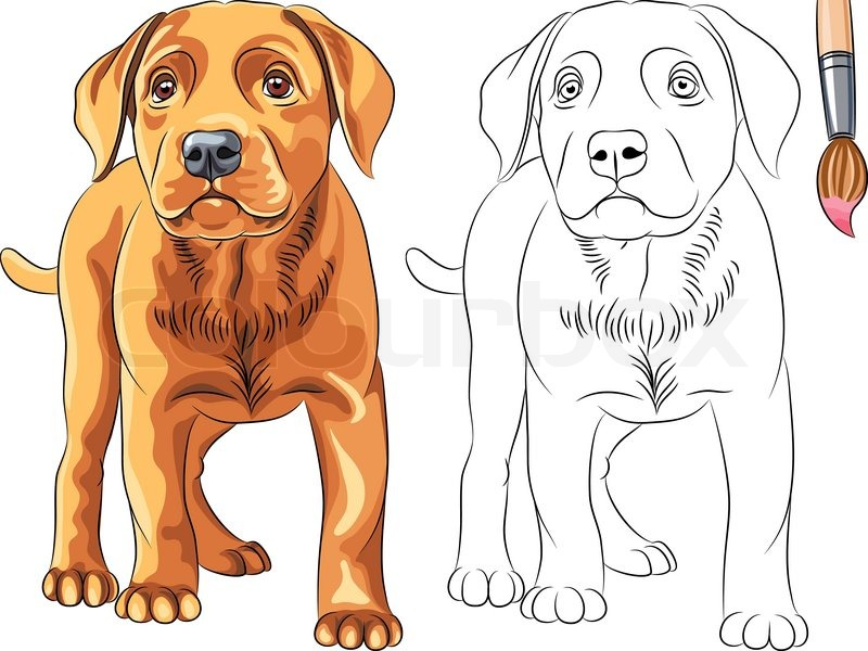 Vector Coloring Book for Children of funny serious Puppy dog ...