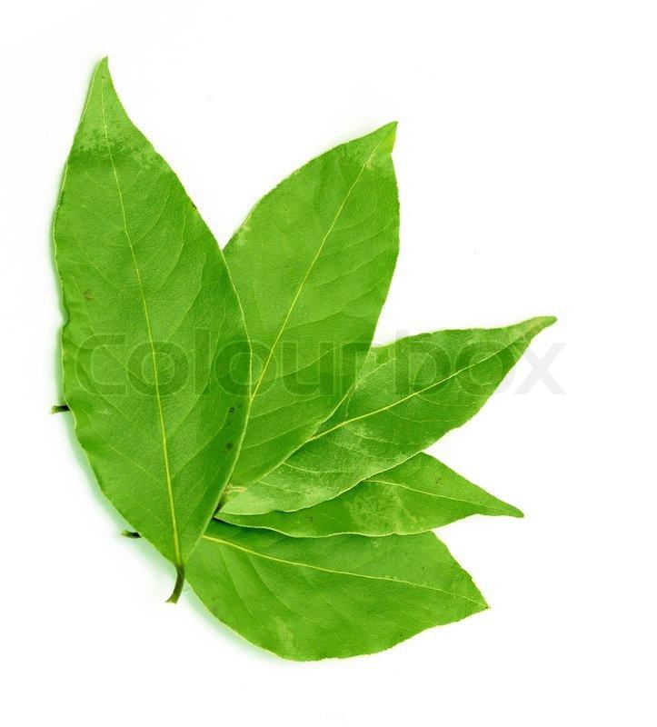 Grønne Laurbærblad På En Hvid Stock Foto Colourbox