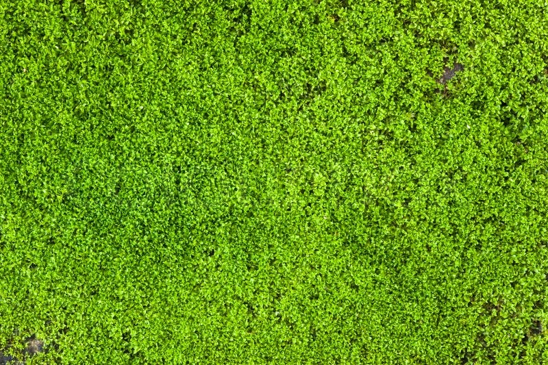 Moos textur stock foto colourbox for Moos bilder pflanzen