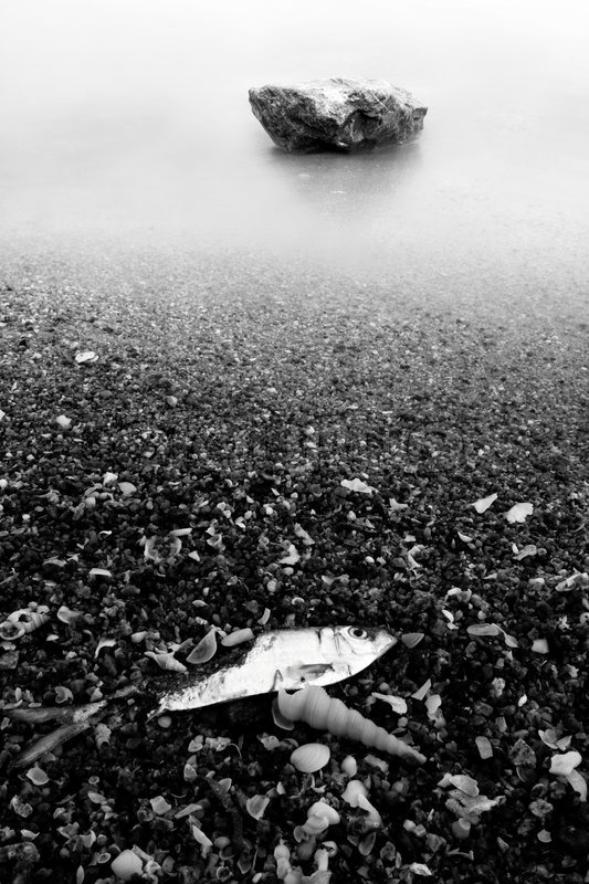 Dead fish and stone on the beach, black and white, stock photo
