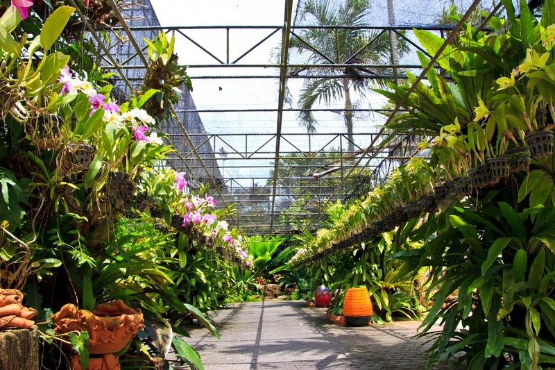 Orchids Garden , At Pattaya, Stock Photo