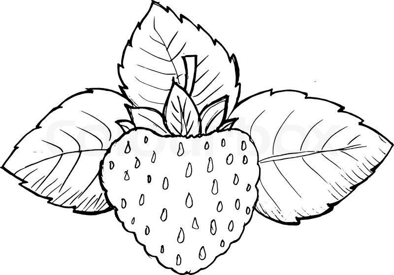 go mit images downloads coloring pages lavi | Erdbeere | Stock-Vektor | Colourbox