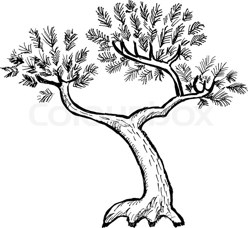 Cartoon Nature Tree Fir Isolated On White Background
