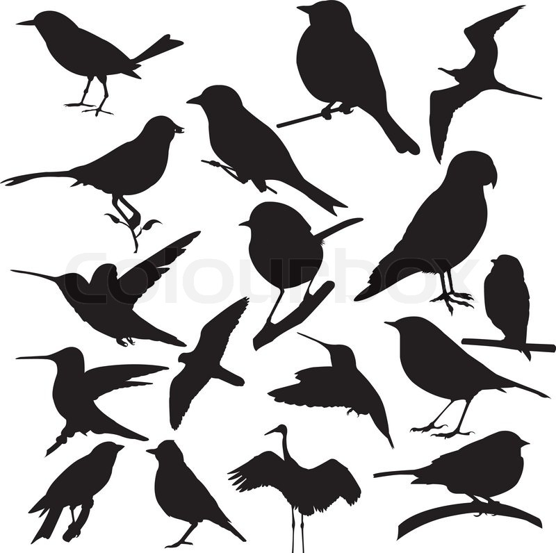 Bird, vector, silhouette isolate on white background ...