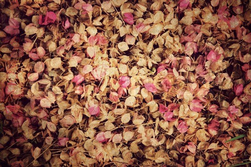 Blumen Hintergrund Vintage Stil Bild 6221333