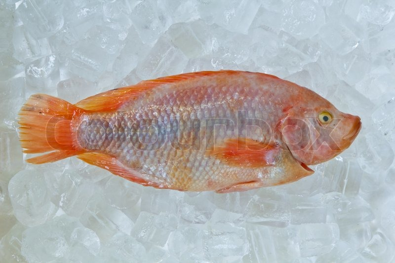 nile tilapia as an additive ingredient Nile tilapia as one of ingredients in thai snack can be an alternative recipe for increasing the consumption of fish development of fish-based thai snacks can.