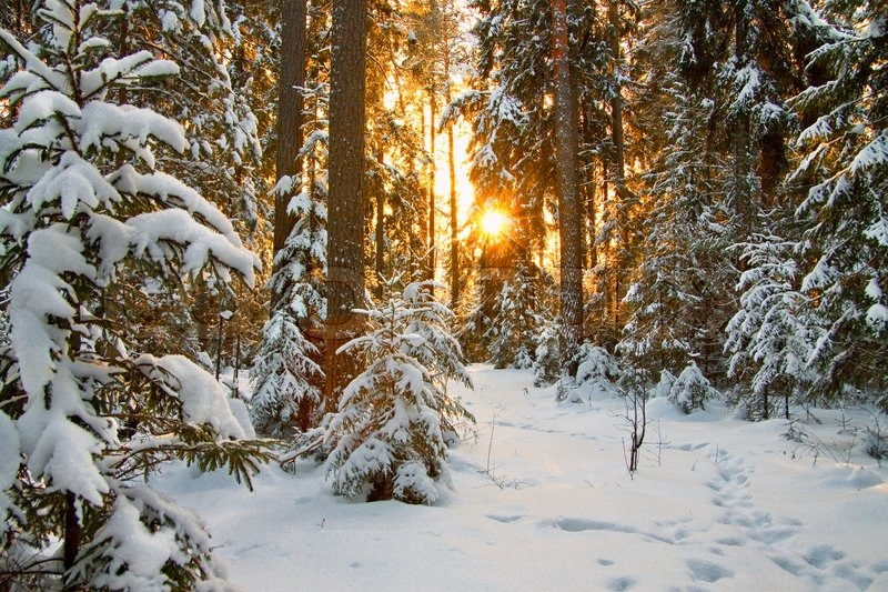 Beautiful winter landscape with the sun, stock photo