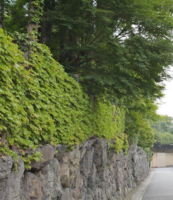 Wall trees, stock photo