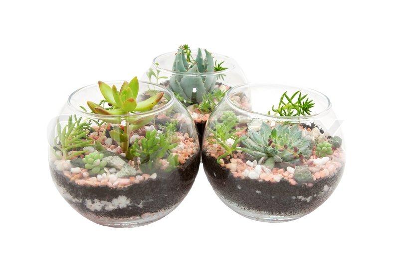 drei klare glas t pfe mit pflanzen stockfoto colourbox. Black Bedroom Furniture Sets. Home Design Ideas