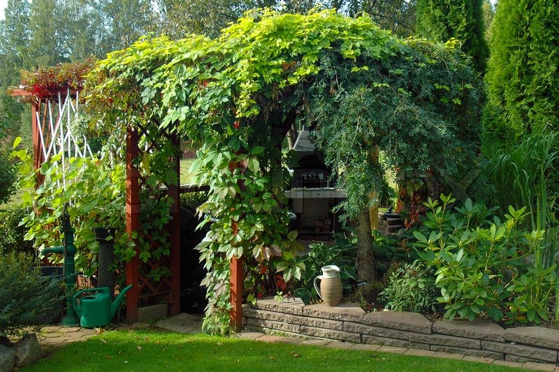 Lush climbing plants in a pergola in a beautiful garden stock photo colourbox - Pergola climbing plants under natures roof ...