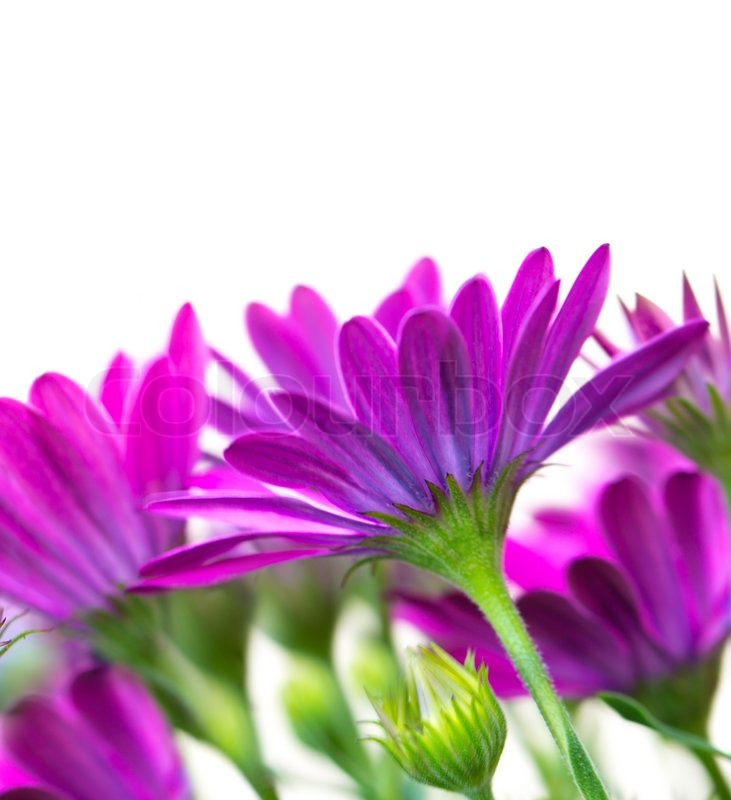 Beautiful purple flowers stock photo colourbox mightylinksfo
