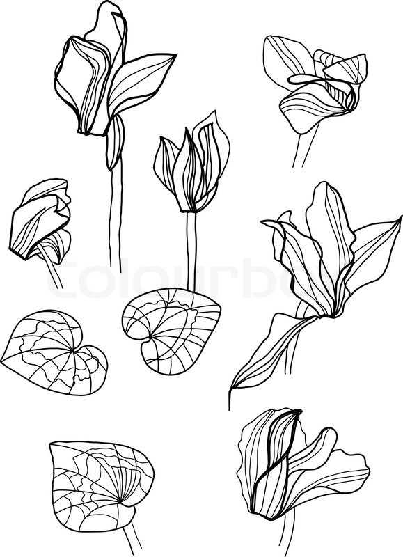Botany Coloring Pages Flowers