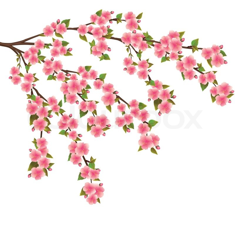Nature background with blossoming sakura branch royalty free stock - Sakura Blossom Realistic Vector Japanese Cherry Tree