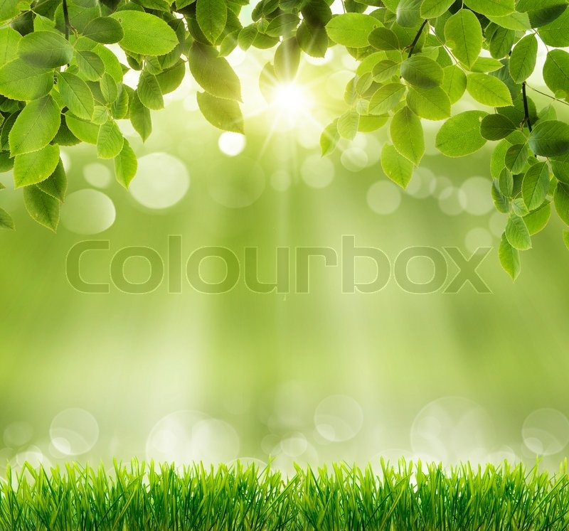 Natural green background with selective focus, stock photo