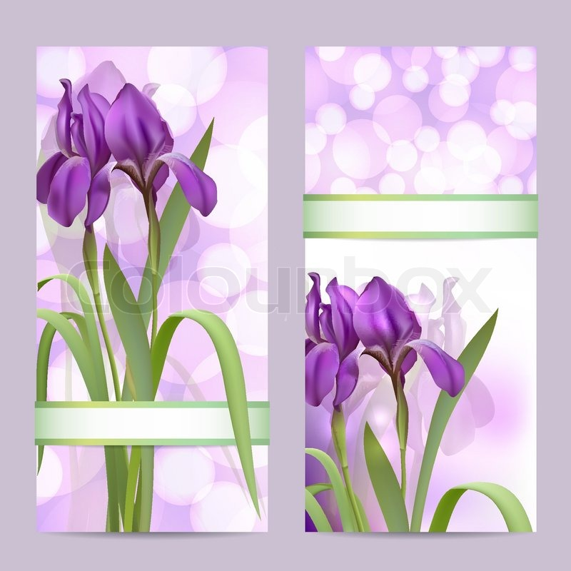 set fr hjahr banner mit purple iris blumen vektorgrafik colourbox. Black Bedroom Furniture Sets. Home Design Ideas