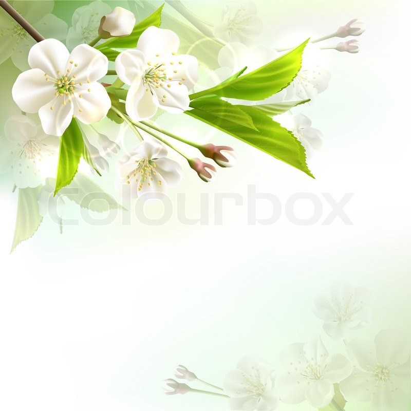 Blossoming tree branch with white flowers, stock photo