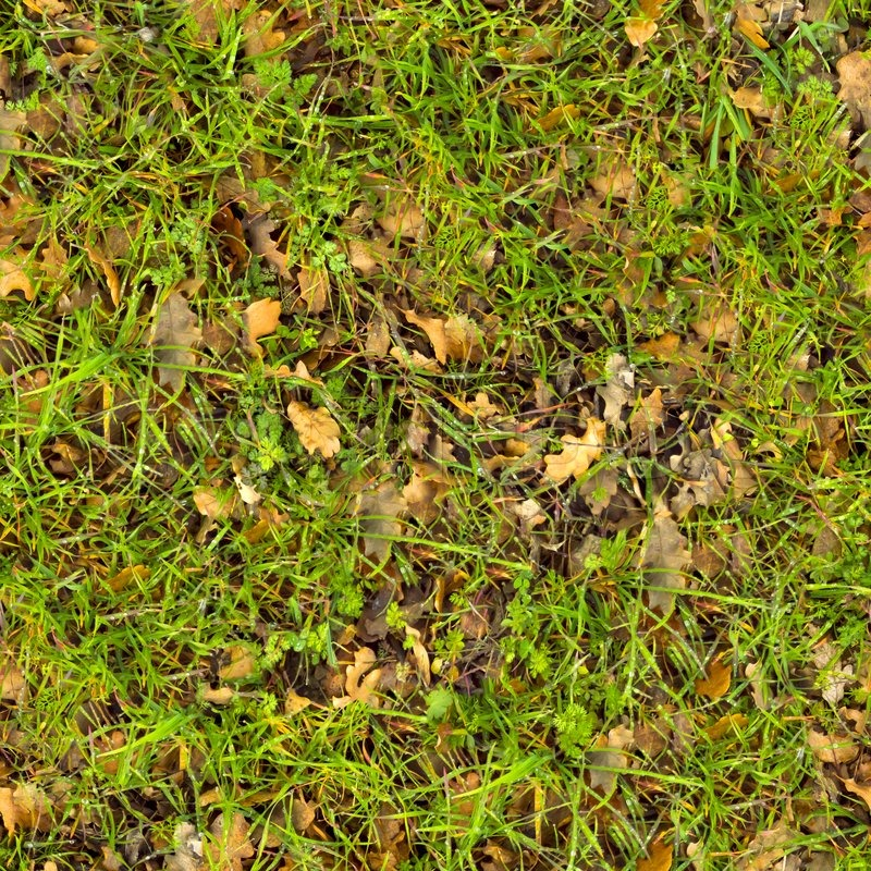 Waldboden Seamless Texture Stock Foto Colourbox