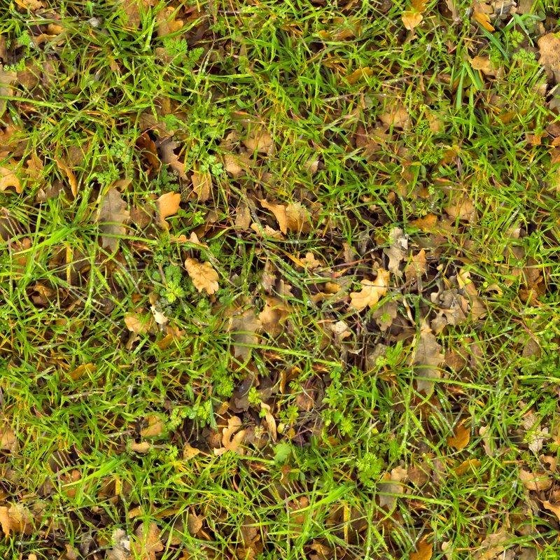 Waldboden Seamless Texture Stock Foto Colourbox