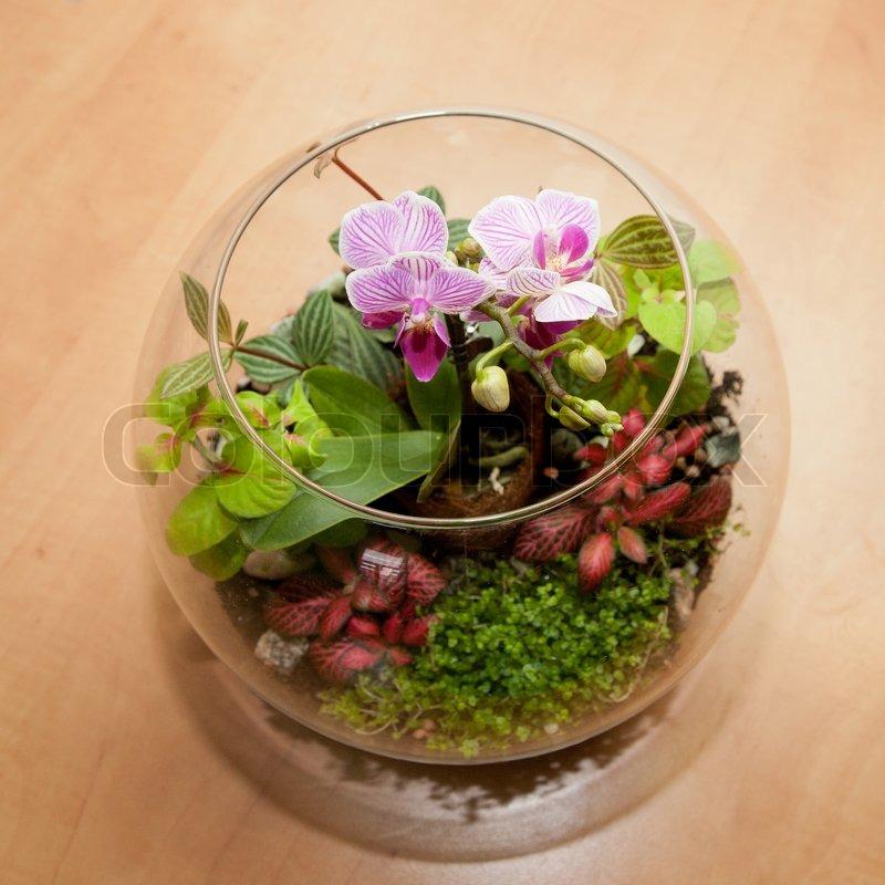 mini orchideen und andere zimmerpflanzen stockfoto colourbox. Black Bedroom Furniture Sets. Home Design Ideas