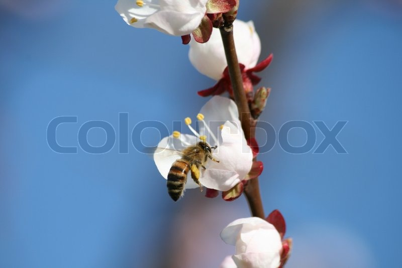Stock image of 'Bee on flower'