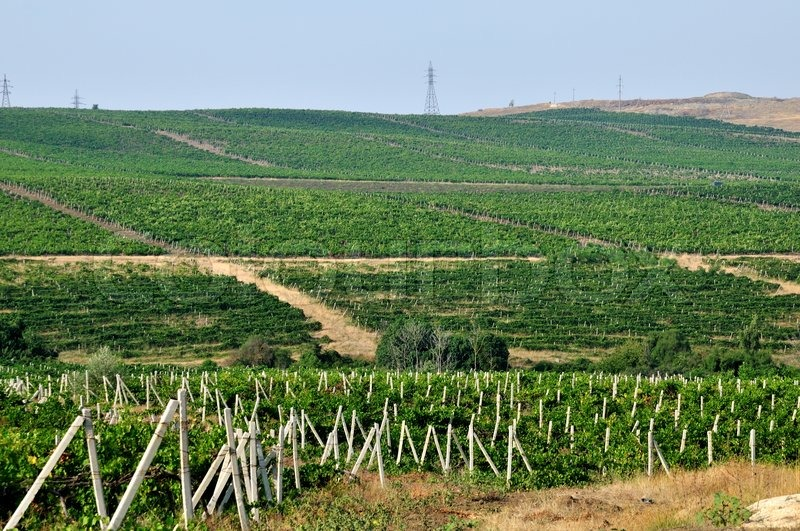 Stock image of 'Wineyard'
