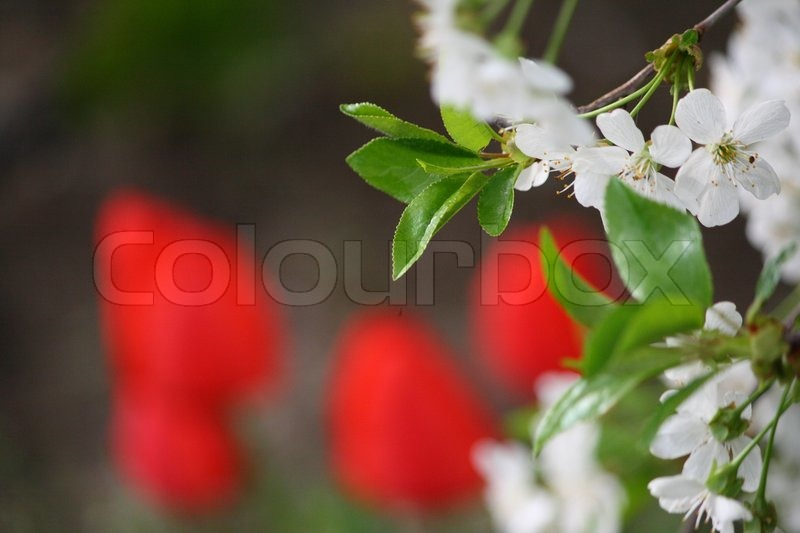 Stock image of 'Spring signs'