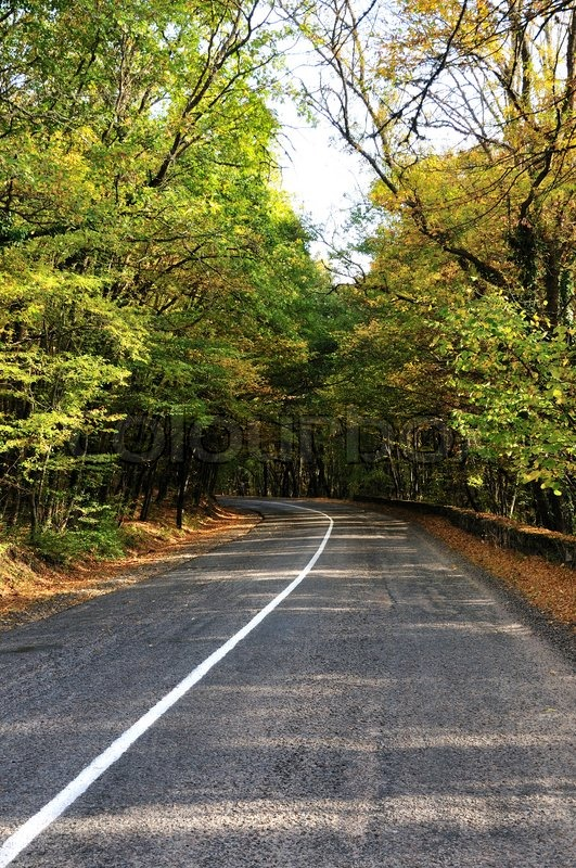 Stock image of 'Road in the autumn forest'