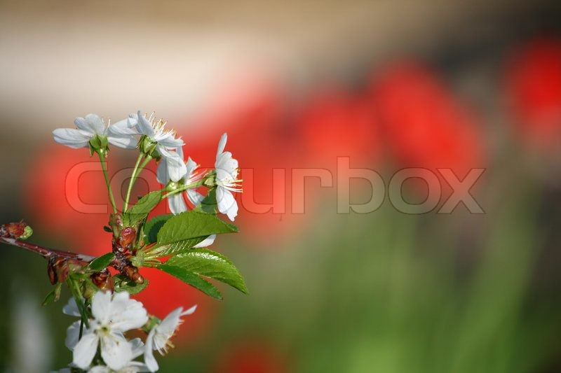 Stock image of 'White flowers'