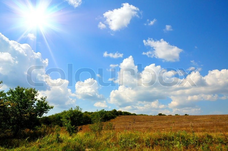 Stock image of 'summer time, landscape with gold field, blue sky  '