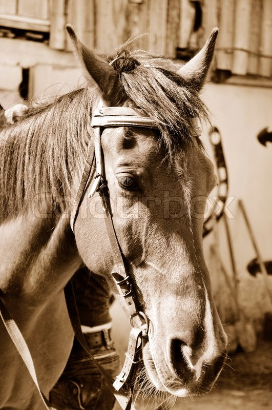 Stock image of 'Horse in sepia'
