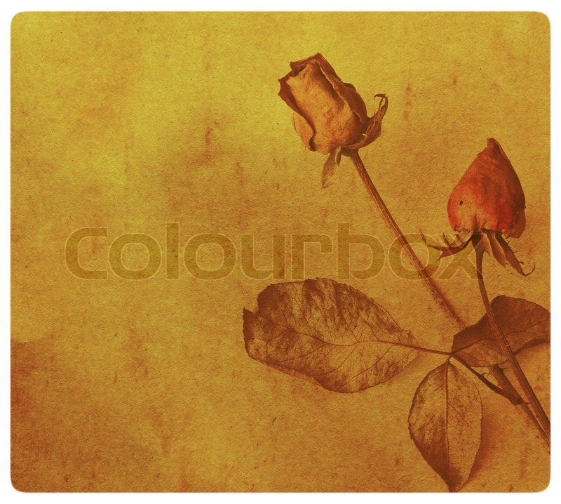 Stock image of 'Vintage background with old paper, roses dry'