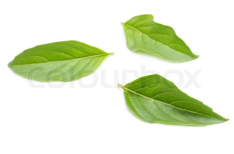 Stock image of 'Sweet basil leaves'