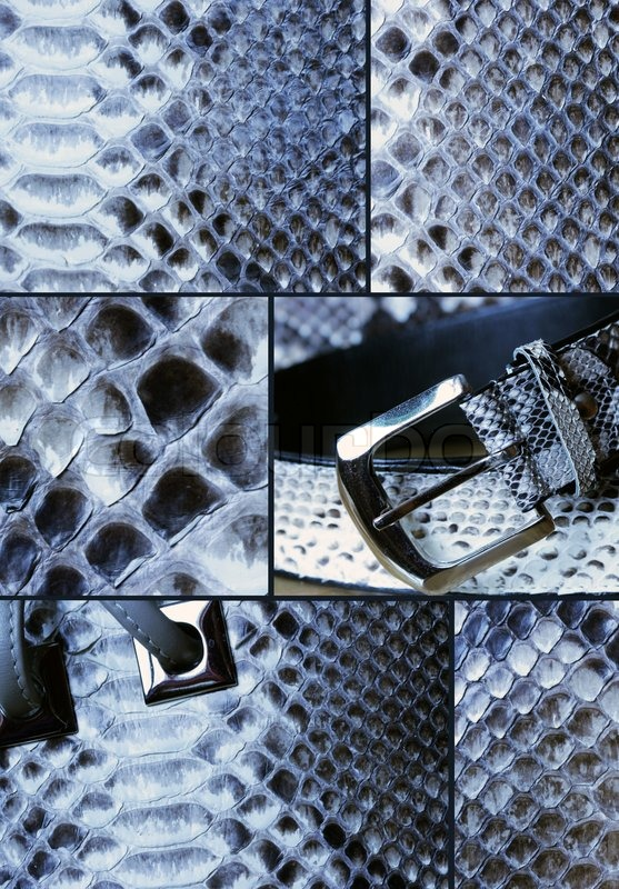 Stock image of 'Collage with snake skin'