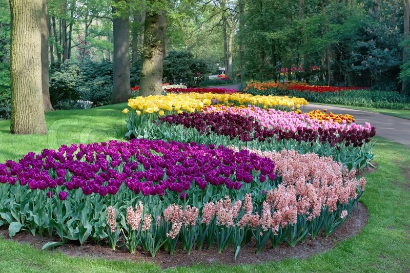 Stock image of 'A view of a park full of flowers'