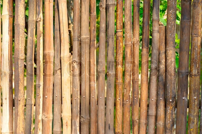 Stock image of 'Bamboo fence'